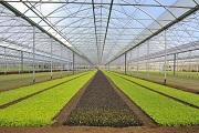 Inkoa construirá un invernadero en Ucrania